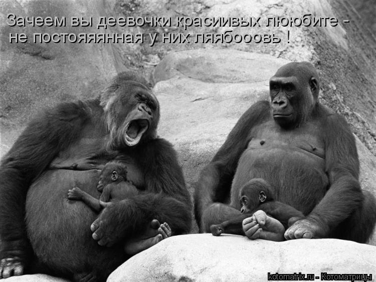 Котоматрица: Зачеем вы деевочки красиивых лююбите - не постояяянная у них ляябооовь !