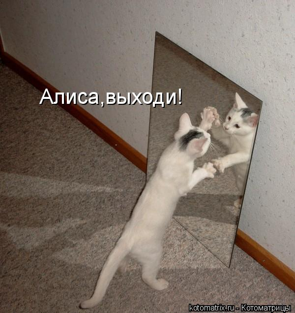 Котоматрица: Алиса,выходи!
