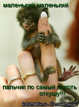 Котоматрица: маленький.маленький пальчик по самый локоть   откушу!!!