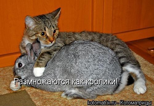 Котоматрица: Размножаются как кролики!