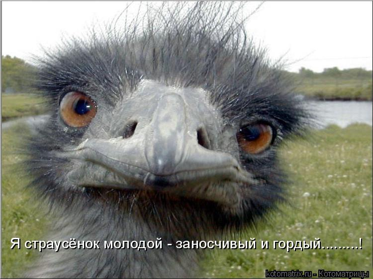 Котоматрица: Я страусёнок молодой - заносчивый и гордый.........!