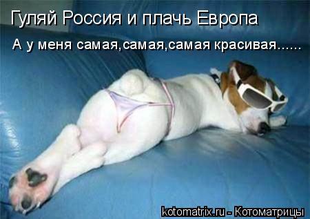 Котоматрица: Гуляй Россия и плачь Европа А у меня самая,самая,самая красивая......