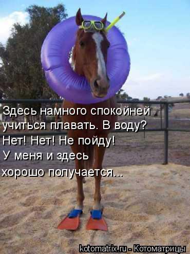 Котоматрица: Здесь намного спокойней  учиться плавать. В воду? Нет! Нет! Не пойду! У меня и здесь  хорошо получается...