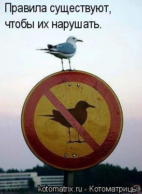 Котоматрица: Правила существуют,  чтобы их нарушать.