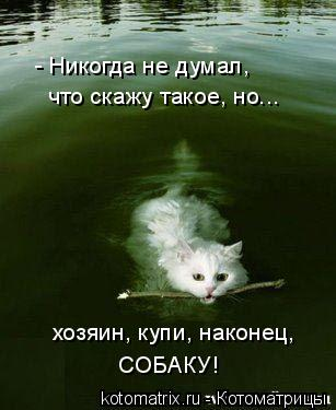 Котоматрица: - Никогда не думал, что скажу такое, но... хозяин, купи, наконец, СОБАКУ!