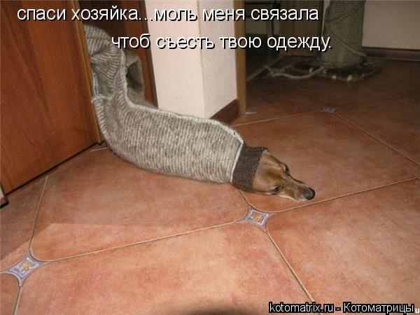 Котоматрица: спаси хозяйка...моль меня связала чтоб съесть твою одежду.