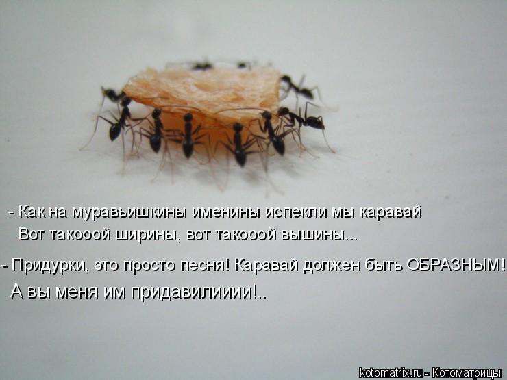 Котоматрица: - Как на муравьишкины именины испекли мы каравай Вот такооой ширины, вот такооой вышины... - Придурки, это просто песня! Каравай должен быть О