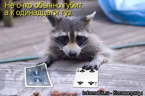 Котоматрица: Не очко обычно губит, а к одинадцати туз.
