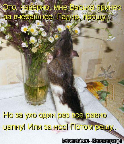 Котоматрица: Это, наверно, мне Васька принес за вчерашнее. Ладно, прощу... Но за ухо один раз все равно  цапну! Или за нос! Потом решу...