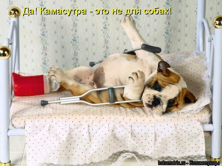 Котоматрица: Да! Камасутра - это не для собак!