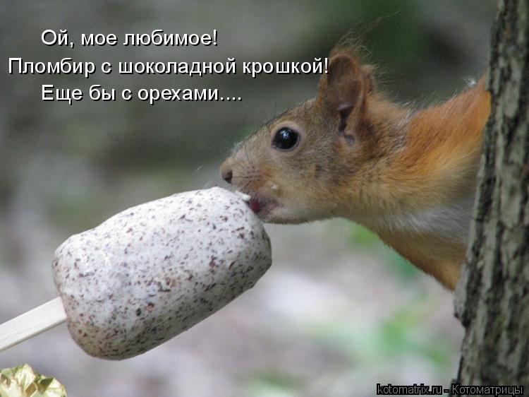 Котоматрица: Ой, мое любимое! Пломбир с шоколадной крошкой! Еще бы с орехами....