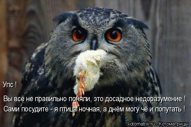 Котоматрица: Вы всё не правильно поняли, это досадное недоразумение ! Сами посудите - я птица ночная, а днём могу чё и попутать ! Упс !