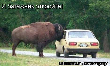 Котоматрица: И багажник откройте!