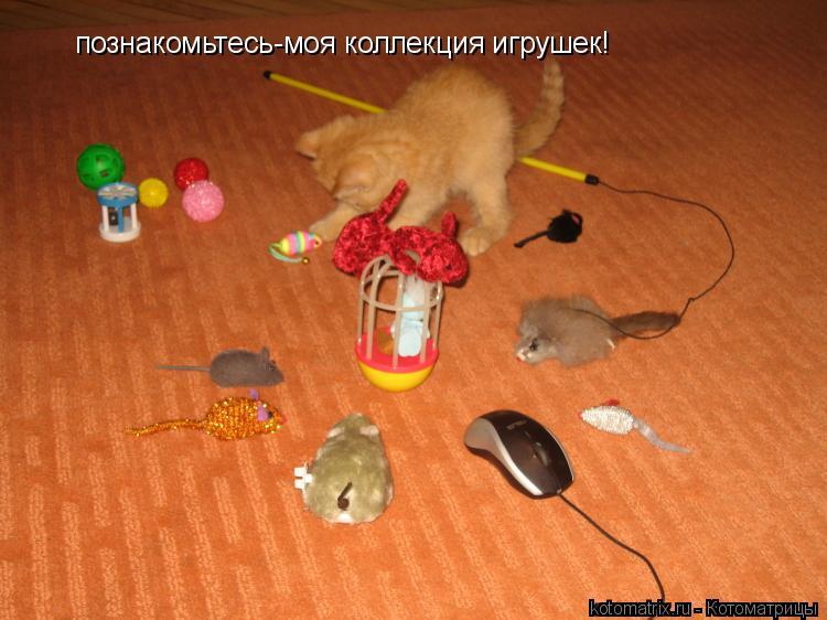 Котоматрица: познакомьтесь-моя коллекция игрушек!