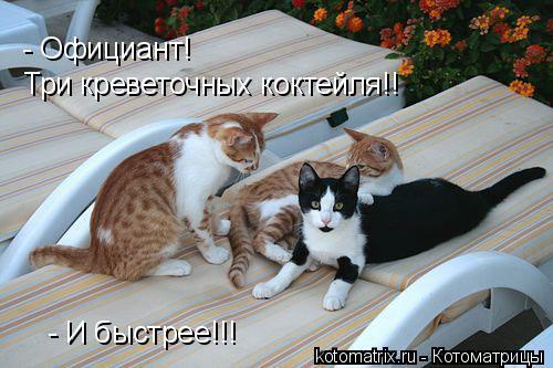 Котоматрица: - Официант!  Три креветочных коктейля!! - И быстрее!!!