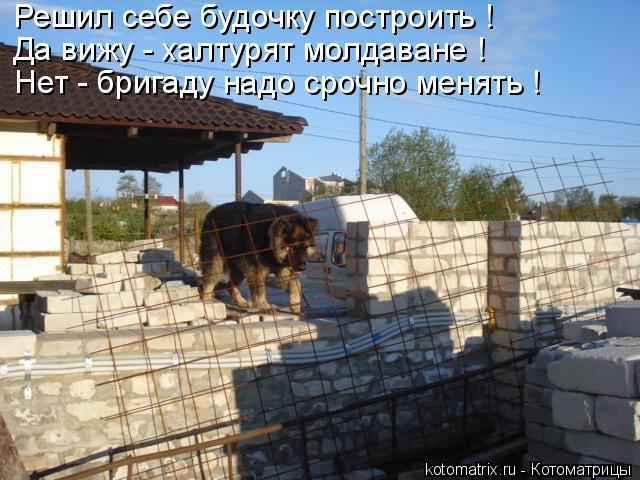 Котоматрица: Решил себе будочку построить ! Да вижу - халтурят молдаване ! Нет - бригаду надо срочно менять !