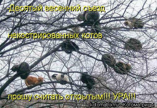 Котоматрица: некострированных котов -Десятый весенний съезд прошу считать открытым!!! УРА!!!