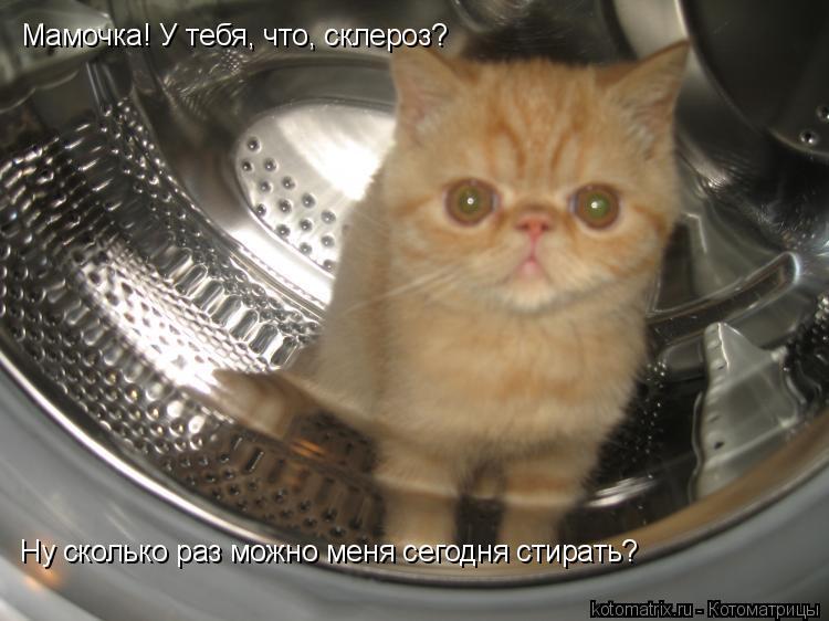 Котоматрица: Мамочка! У тебя, что, склероз? Ну сколько раз можно меня сегодня стирать?