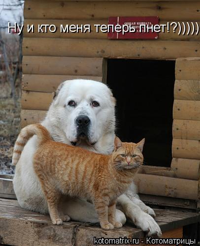 Котоматрица: Ну и кто меня теперь пнет!?)))))