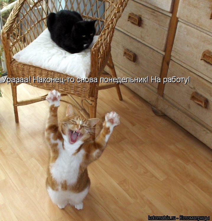 Котоматрица: Ураааа! Наконец-то снова понедельник! На работу!