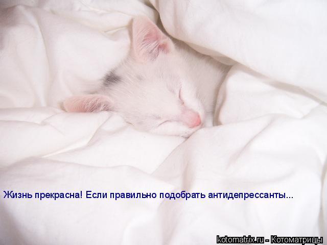 Котоматрица: Жизнь прекрасна! Если правильно подобрать антидепрессанты...