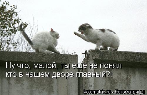 Котоматрица: Ну что, малой, ты ещё не понял кто в нашем дворе главный?!