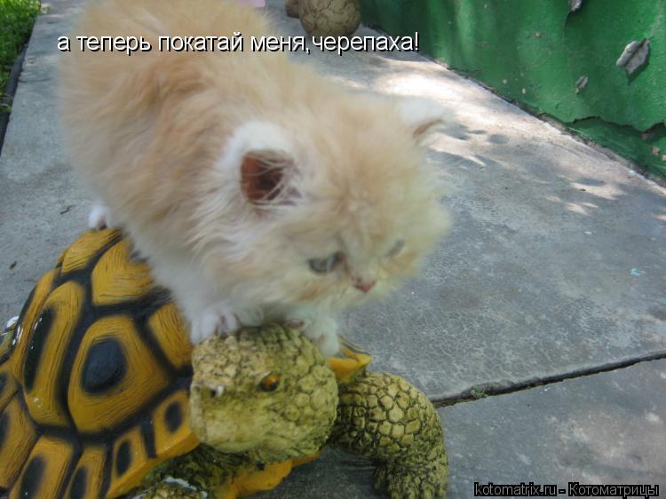 Котоматрица: а теперь покатай меня,черепаха!