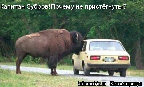 Котоматрица: Капитан Зубров!Почему не пристёгнуты?