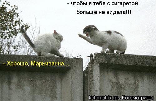 Котоматрица: - чтобы я тебя с сигаретой больше не видела!!! - Хорошо, Марьиванна...