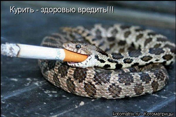 Котоматрица: Курить - здоровью вредить!!!