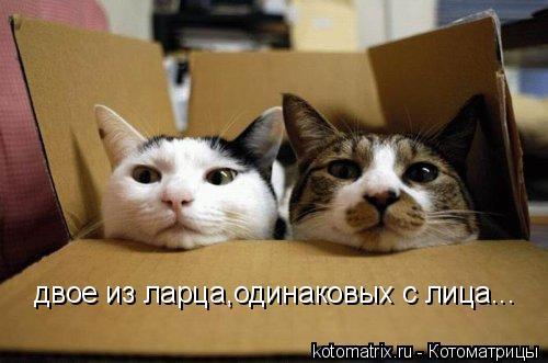 Котоматрица: двое из ларца,одинаковых с лица...