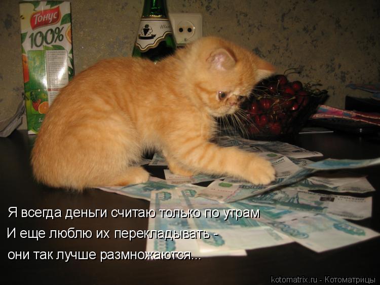 Котоматрица: Я всегда деньги считаю только по утрам И еще люблю их перекладывать -  они так лучше размножаются...