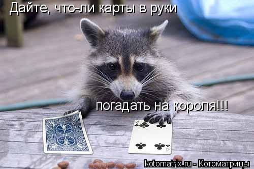 Котоматрица: Дайте, что-ли карты в руки погадать на короля!!!