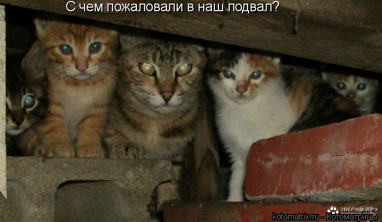 Котоматрица: С чем пожаловали в наш подвал?