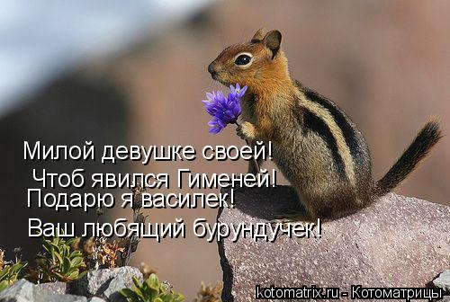 Котоматрица: Милой девушке своей! Чтоб явился Гименей! Подарю я василек! Ваш любящий бурундучек!