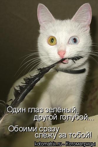 Котоматрица: Один глаз зелёный, другой голубой... Обоими сразу  слежу за тобой!