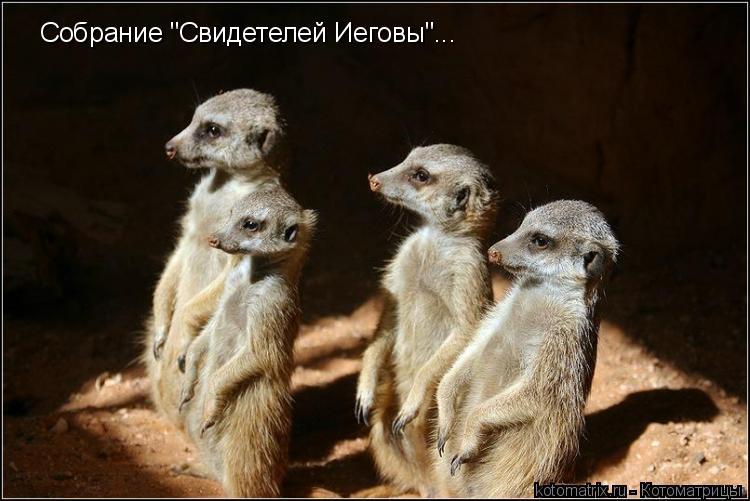 """Котоматрица: Собрание """"Свидетелей Иеговы""""..."""