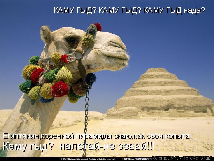 Котоматрица: КАМУ ГЫД? КАМУ ГЫД? КАМУ ГЫД нада? Египтянин,коренной,пирамиды знаю,как свои копыта...   Каму гыд? налетай-не зевай!!!