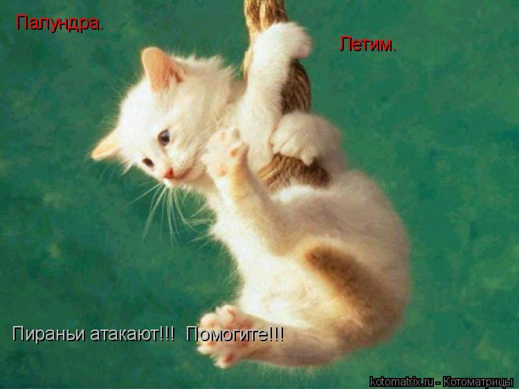 Котоматрица: Палундра. Летим. Пираньи атакают!!!  Помогите!!!