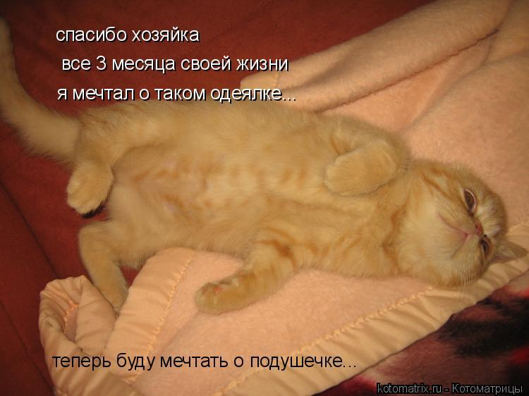 Котоматрица: спасибо хозяйка все 3 месяца своей жизни я мечтал о таком одеялке... теперь буду мечтать о подушечке...