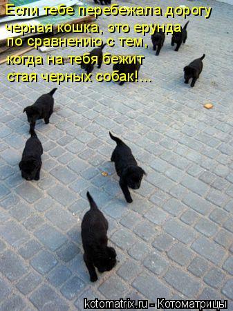 Котоматрица: Если тебе перебежала дорогу черная кошка, это ерунда по сравнению с тем, когда на тебя бежит стая черных собак!...