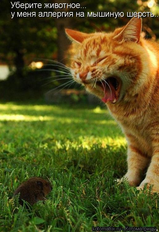 Котоматрица: Уберите животное...  у меня аллергия на мышиную шерсть....