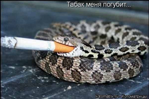 Котоматрица: Табак меня погубит...