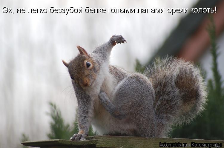 Котоматрица: Эх, не легко беззубой белке голыми лапами орехи колоть!