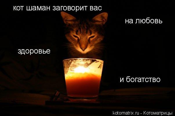 Котоматрица: кот шаман заговорит вас  на любовь здоровье и богатство