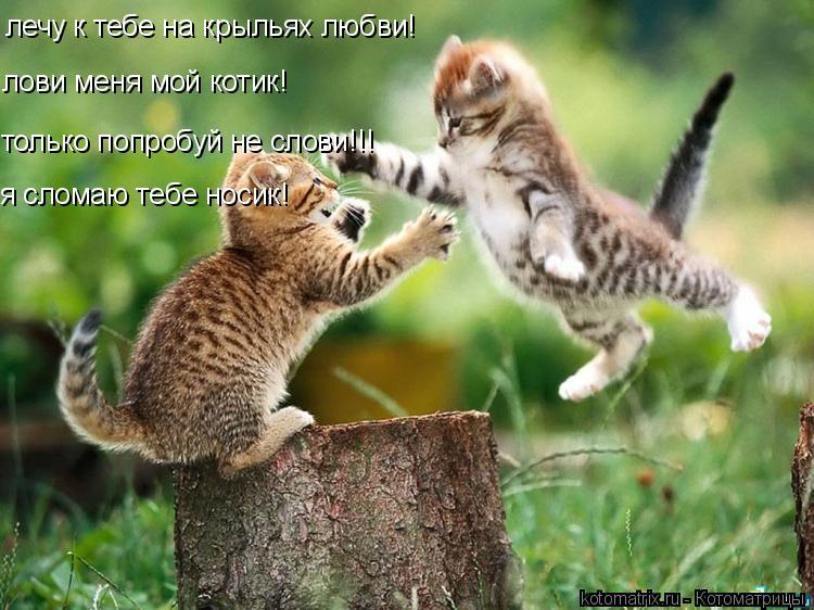 Котоматрица: лечу к тебе на крыльях любви! лови меня мой котик! только попробуй не слови!!! я сломаю тебе носик!