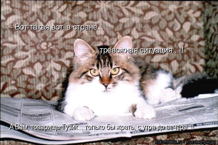 Котоматрица: - Вот такая вот, в стране... ...тревожная ситуация...!! А Вам, товарищь Тузик... только бы жрать, с утра до вечера..!!