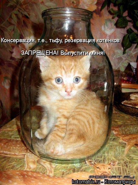 Котоматрица: Консервация, т.е., тьфу, резервация котенков ЗАПРЕЩЕНА! Выпустити миня!