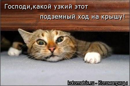Котоматрица: Господи,какой узкий этот подземный ход на крышу!