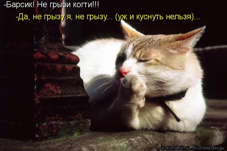 Котоматрица: -Барсик! Не грызи когти!!! -Да, не грызу я, не грызу... (уж и куснуть нельзя)...